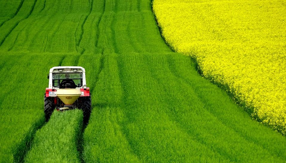 Tractor working on a large rapeseeds field.