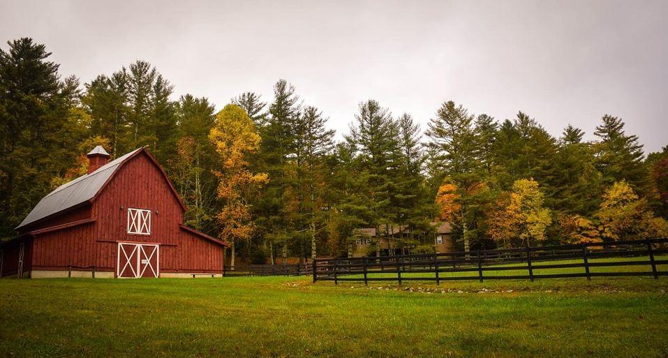 a lush green ranch