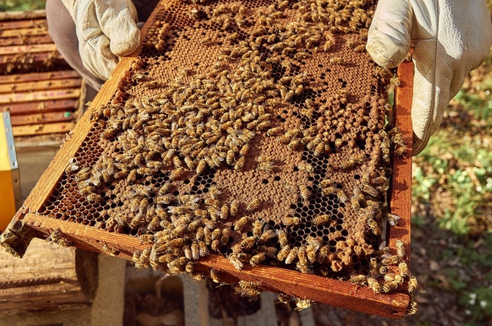 honeycomb with bees swarming over it